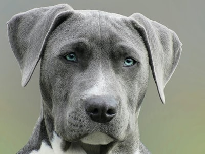 The dog breed test